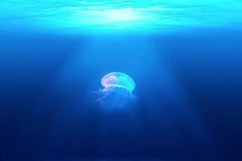 The-Trust-of-a-Jellyfish