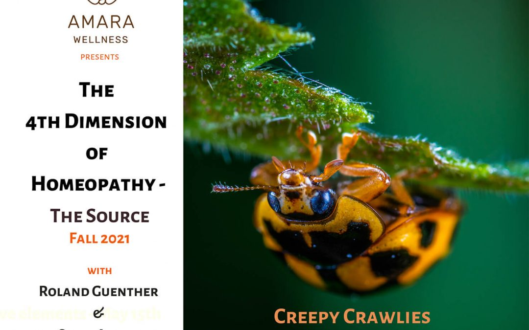 The 4th Dimension of Homeopathy – Creepy Crawlies October 31th