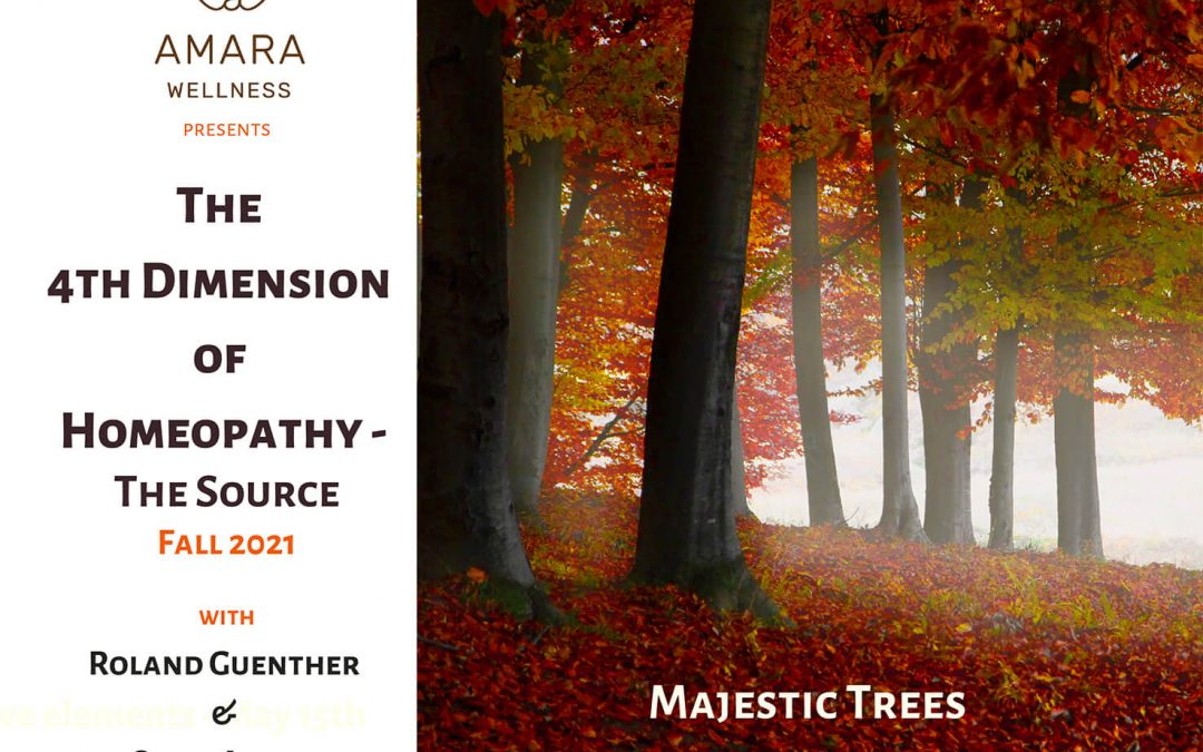 The 4th Dimension of Homeopathy – Majestic Trees September 26th